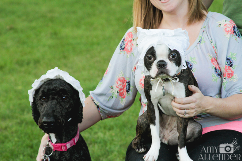 Baby Announcement With Dogs, boston terrier